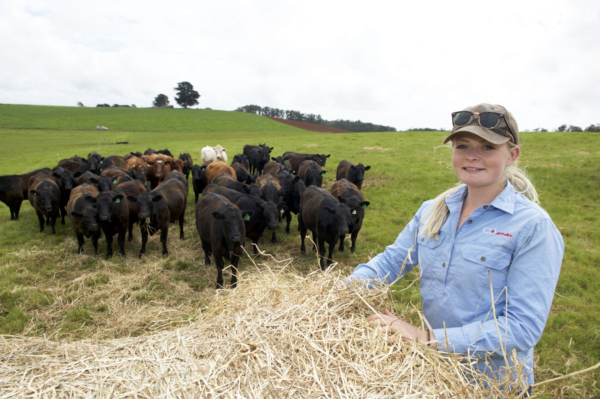 Apprentice posing with a hay bale in front of a herd of cows